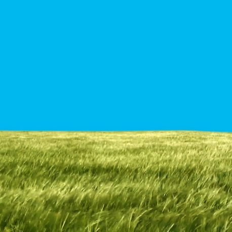 you Footage High Grass moves with the wind HD – PixelBoom (0-00-32-04)