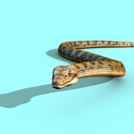 Anaconda Snake Strip Attacks Dies – PixelBoom