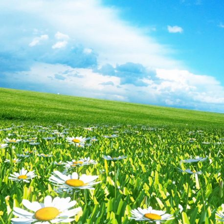 Flowery Meadow Daisies – PixelBoom