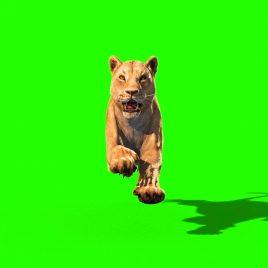 Lioness Run