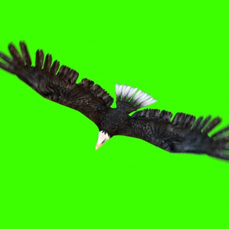 American Eagle Fly – PixelBoom