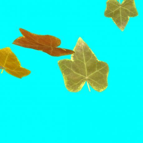 Autumn Leaves Flying – PixelBoom