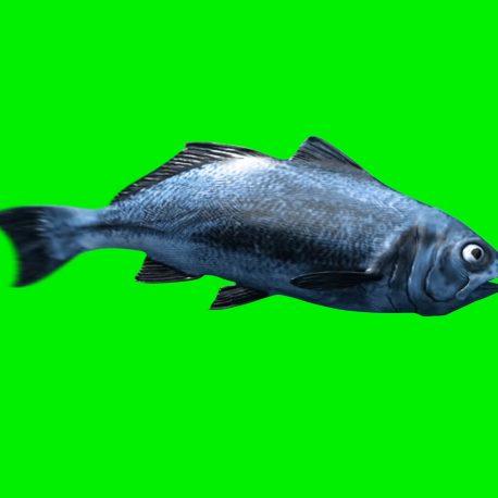 Fish Swim – PixelBoom