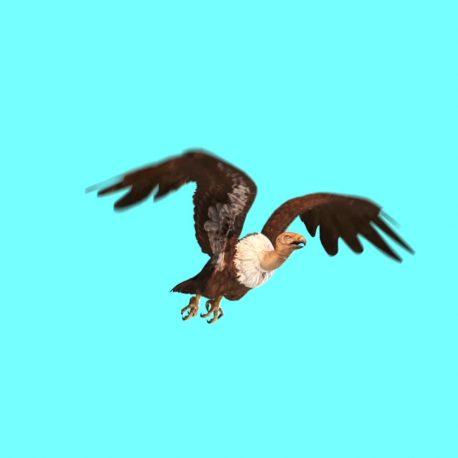 Vulture Bird Predatory – PixelBoom
