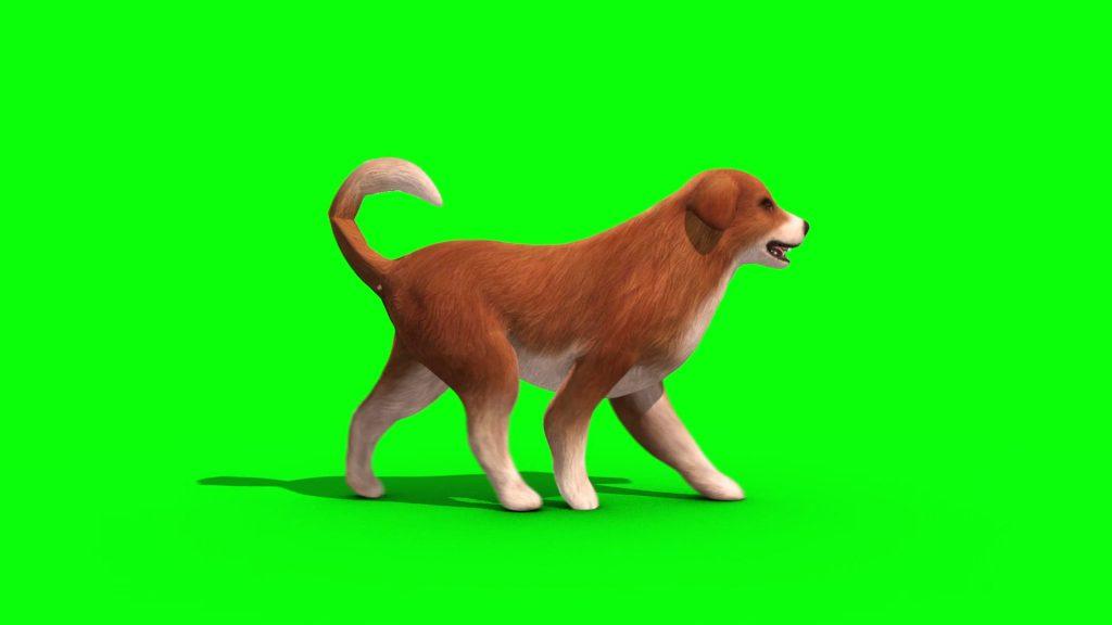 Brown Big Dog