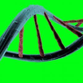 Genetic Code DNA