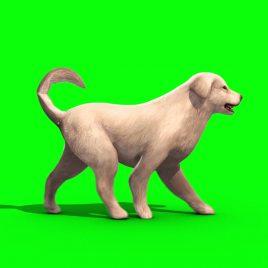 White Big Dog