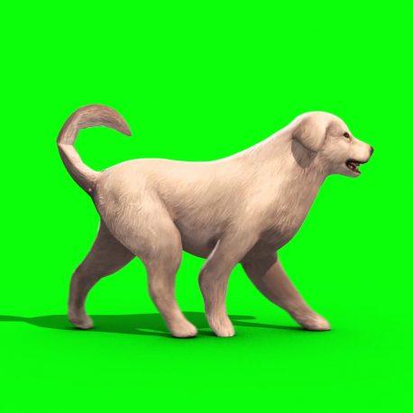 White Big Dog Bark Walk Snif – PixelBoom