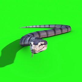 Anaconda Snake SKIN 2