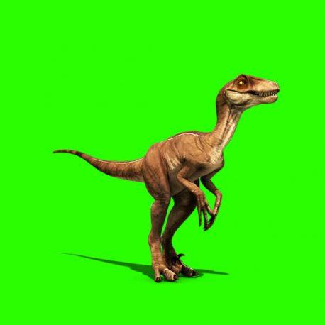 Dinosaurs Velociraptor Prehistory – PixelBoom