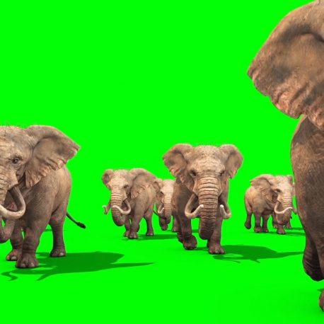Herd of Elephants Walking – PixelBoom