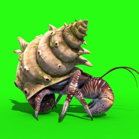 Hermit Crab Paguro – PixelBoom
