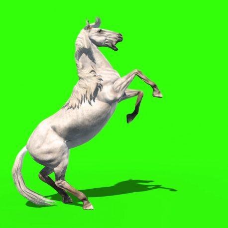 White Horse Runs Prairie Animals – PixelBoom