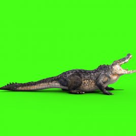 Alligator Crocodile – 3D Model Animated