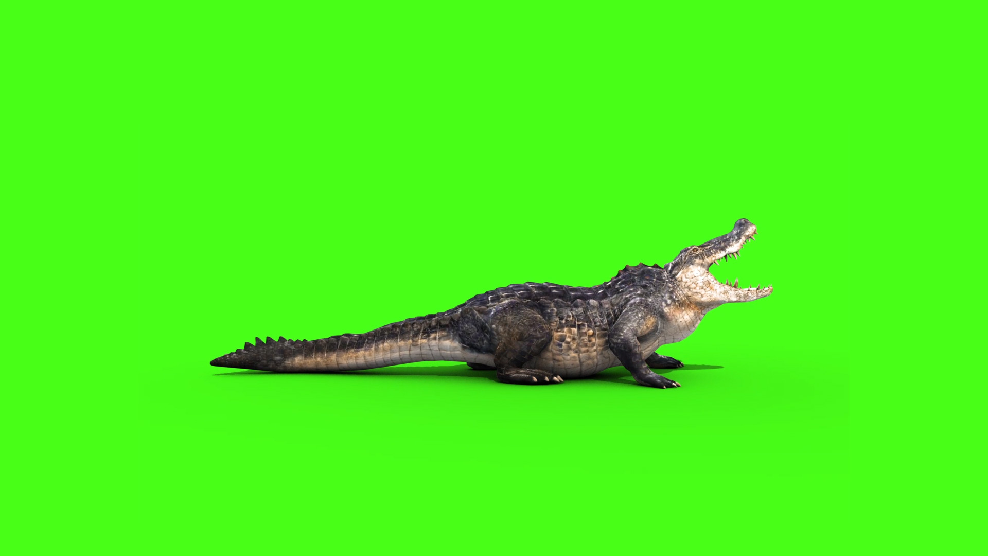 alligator crocodile 3d model animated pixelboom