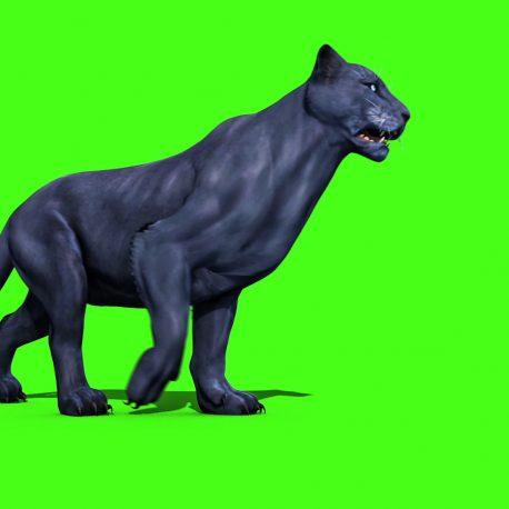 Black Panther Feline Animals Runs Walks – PixelBoom