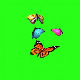 Butterflies Flying – 3D Model Animated