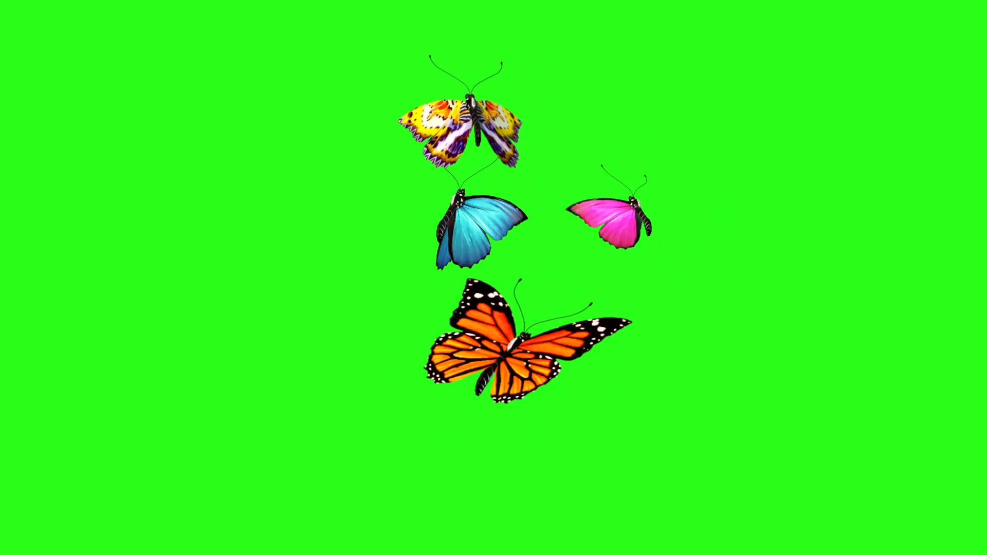 Butterflies Flying - 3D Model Animated