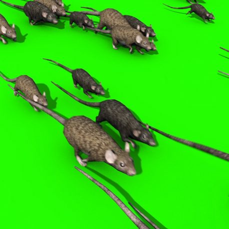 Invasion of Rats Mice Sniff – PixelBoom