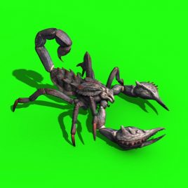 Animal Scorpio – 3D Model Animated