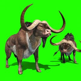 Buffalo Horns Runs – 3D Model Animated