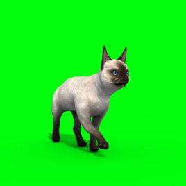 White Cat Feline – 3D Model Animated