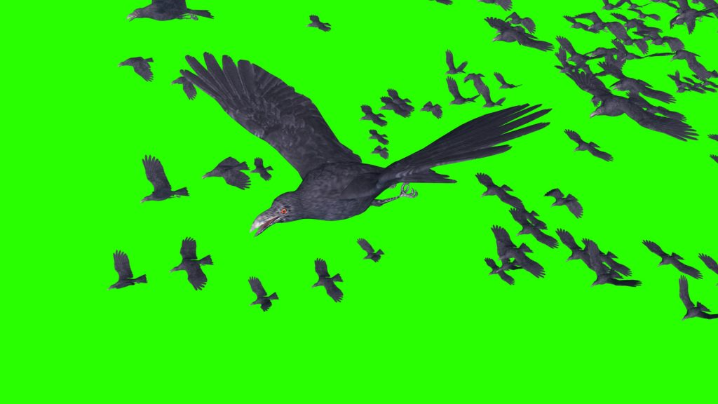 Flock of Crows – 3D Model Animated