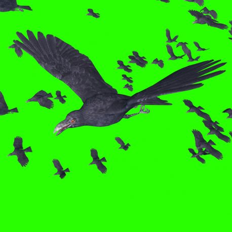 Flock of Crows Animals Birds – PixelBoom