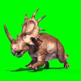 Styracosaurus – 3D Model Animated