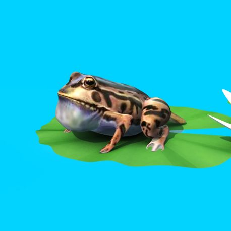 Frog Toad Jumps Water Lily Leaf – PixelBoom