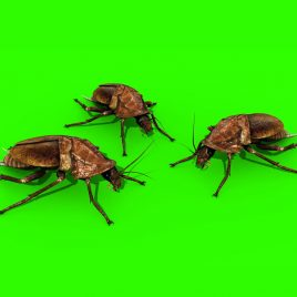 Roaches Invasion – 3D Model Animated