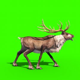 Animal Reindeer – 3D Model Animated