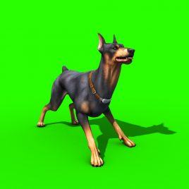 Dog Doberman – 3D Model Animated
