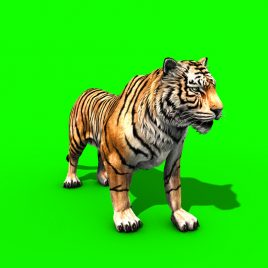 Tiger Run Roar – 3D Model Animated
