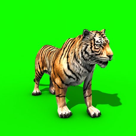 Tiger Run Roar Animals – PixelBoom