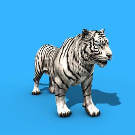 White Tiger Roar – 3D Model Animated