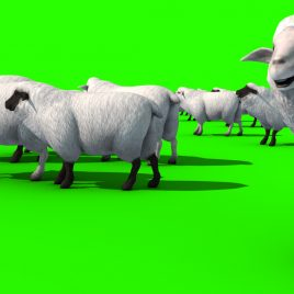 Flock of Sheep – 3D Model Animated