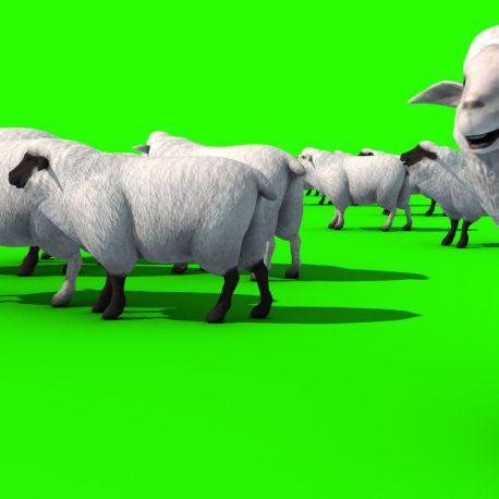 Flock of Sheep – PixelBoom