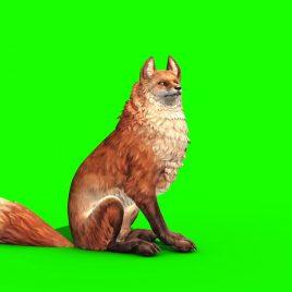 Fox Attack – 3D Model Animated