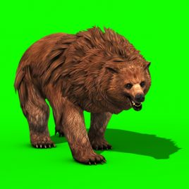 Brown BEAR Roar – 3D Model Animated