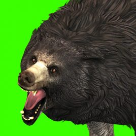 Grizzly BEAR Roar – 3D Model Animated