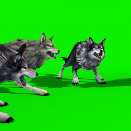 Herd of Wolves – 3D Model Animated