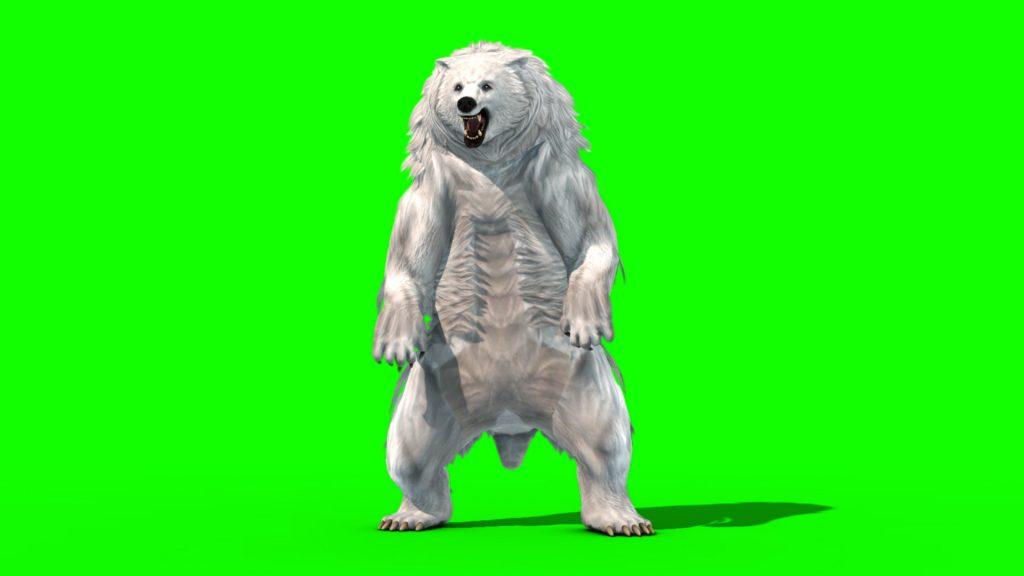 Polar BEAR Roar – 3D Model Animated