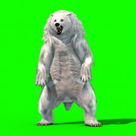 Polar BEAR Roar – 3D Model Animated
