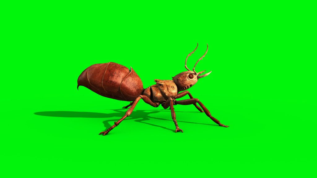 Ant Insect Walk – 3D Model Animated