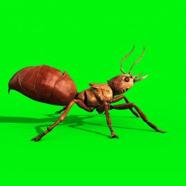 Ant Insect Walk PixelBoom