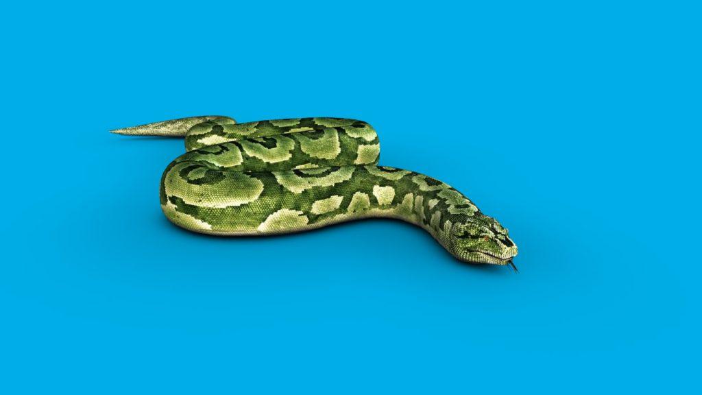 Boa Snake Slithers – 3D Model Animated