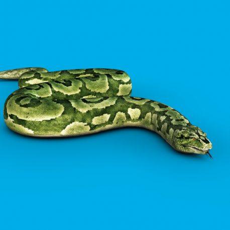 Boa Snake Slithers PixelBoom