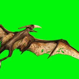 Pteranodon Dinosaurs 3D Model Animated