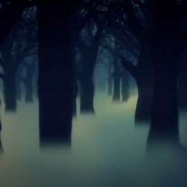 Dark Forest Fog Trees Animated Background Wallpaper PixelBoom